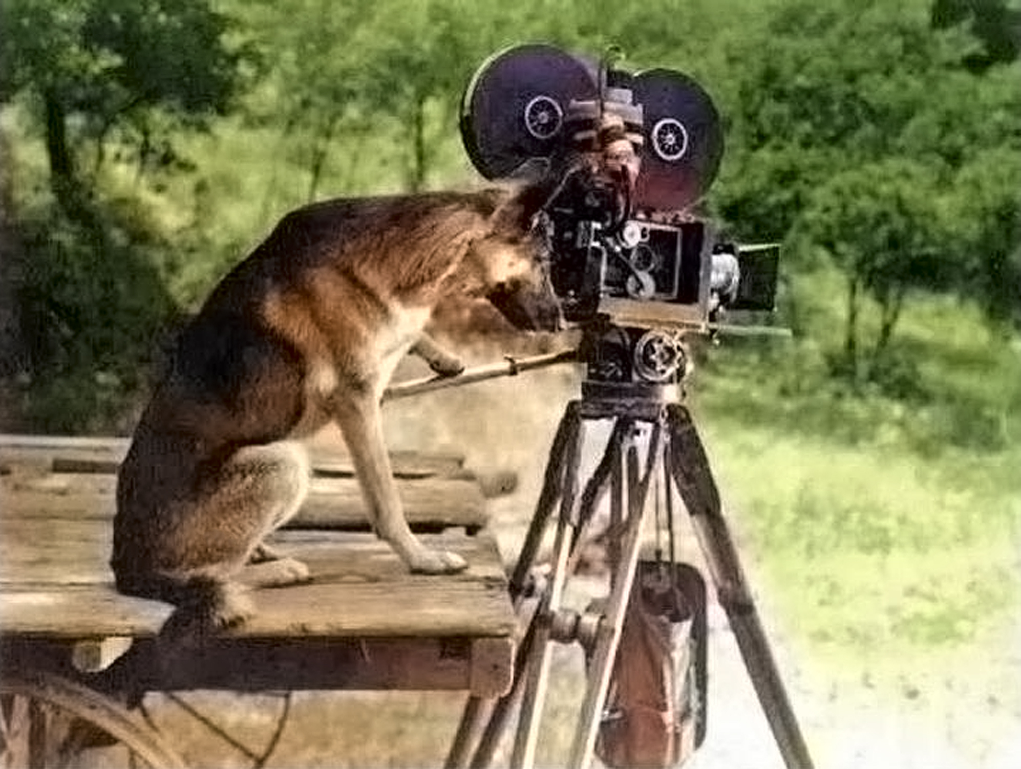 Rin Tin Tin at the Camera Color Final